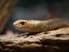 Steve Irwin Zoo