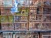 Vogelmarkt