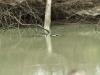 mein erstes Krokodil