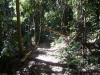 Dorrigo Nationalpark