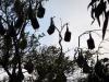 Fledermause im Botanischen Garten