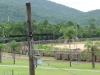 Zuckerrohrtransport bei Tully